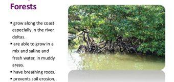 CLIMATE CHANGE: SUNDERBANS FAMED MANGROVES FOREST COVER DEPLETING ALARMINGLY