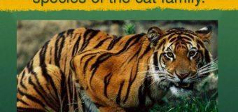 New Tiger Reserve in Chhattisgarh